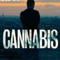 2016 cannabis